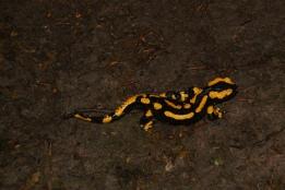 Bei der Vorschüler-Übernachtung sehen wir einen Salamander